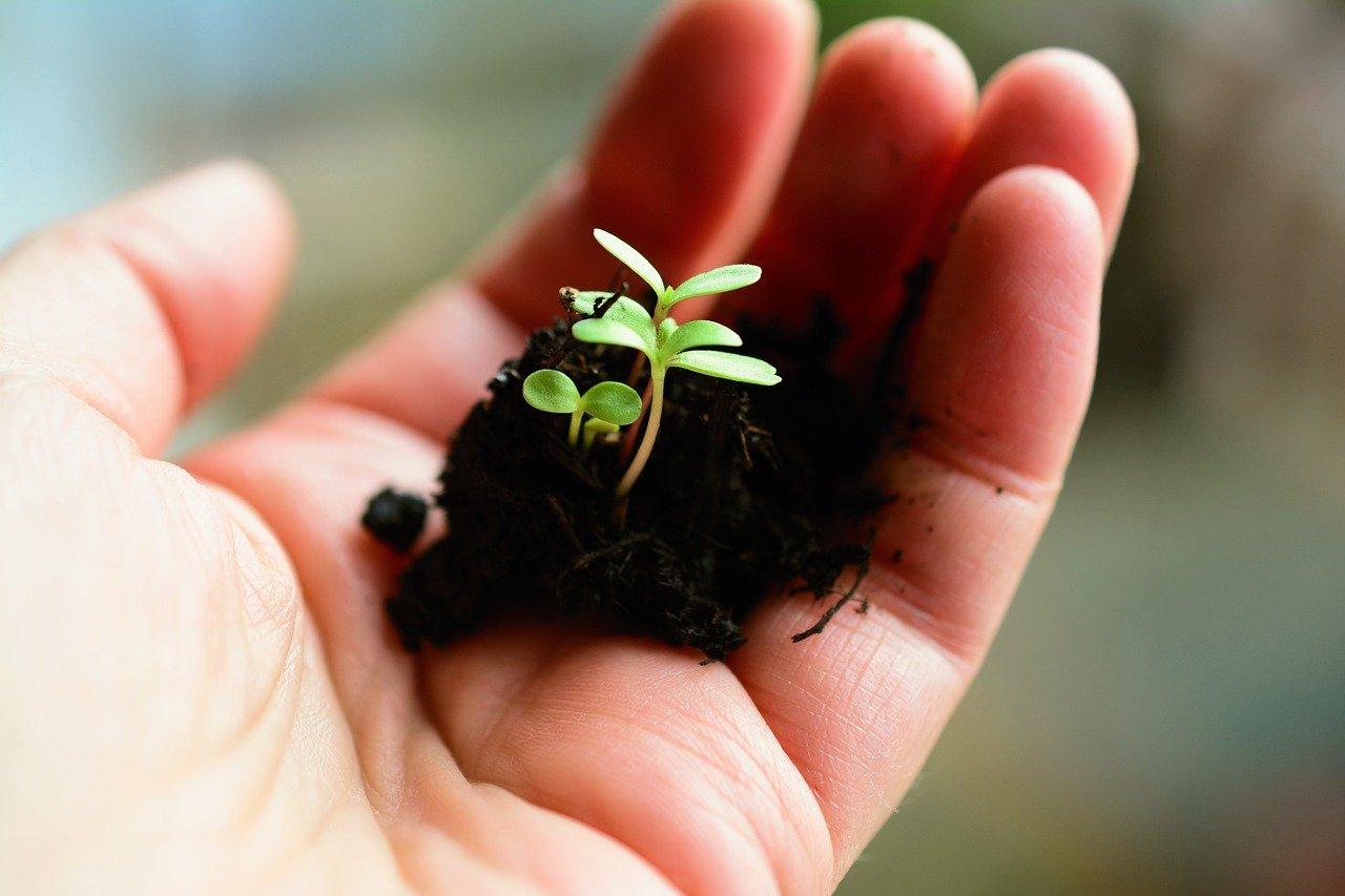 plant, sow, grow